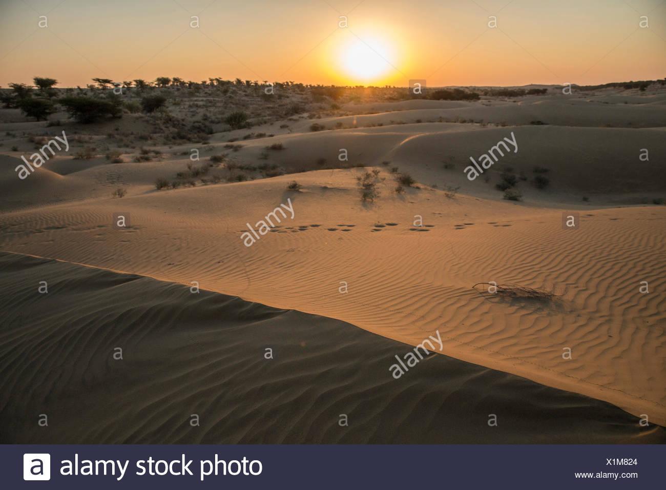 Deserto di Thar, India, Asia, India Rajasthan, sunrise, scenario Immagini Stock