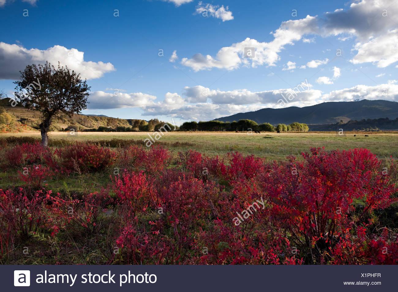 Shangri-La in autunno,Yunnan,Cina Immagini Stock