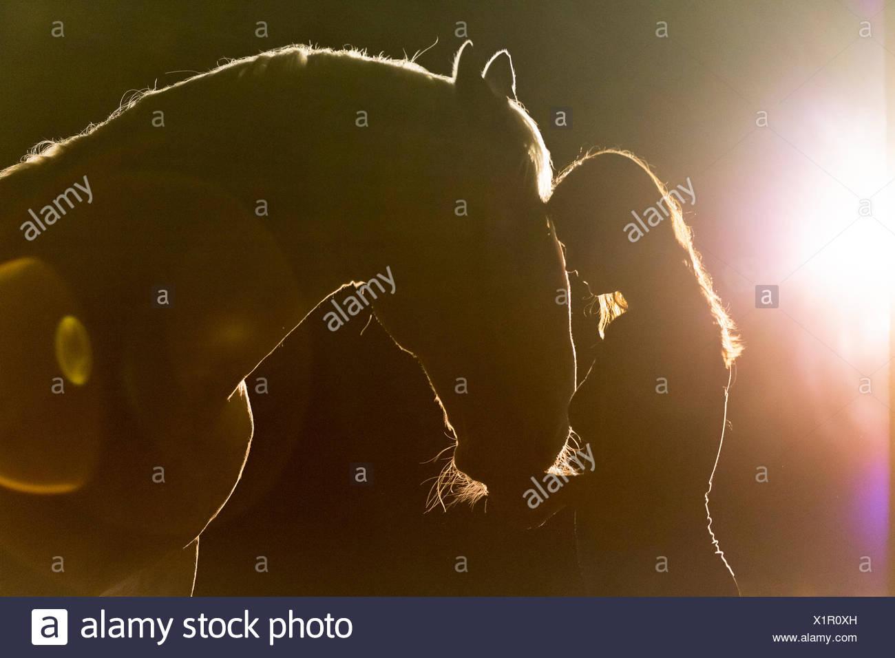 Lipizzan cavallo. Ritratto di adulto stallone (Siglavy Capriola Primas) con la giovane donna nelle tenebre con la luce in background. Austria Immagini Stock