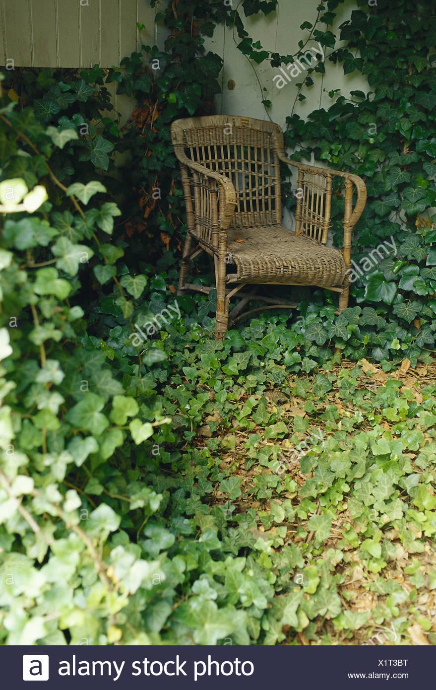 Piante Rampicanti Da Esterno giardino, sedia di vimini, edera, mobili da esterno