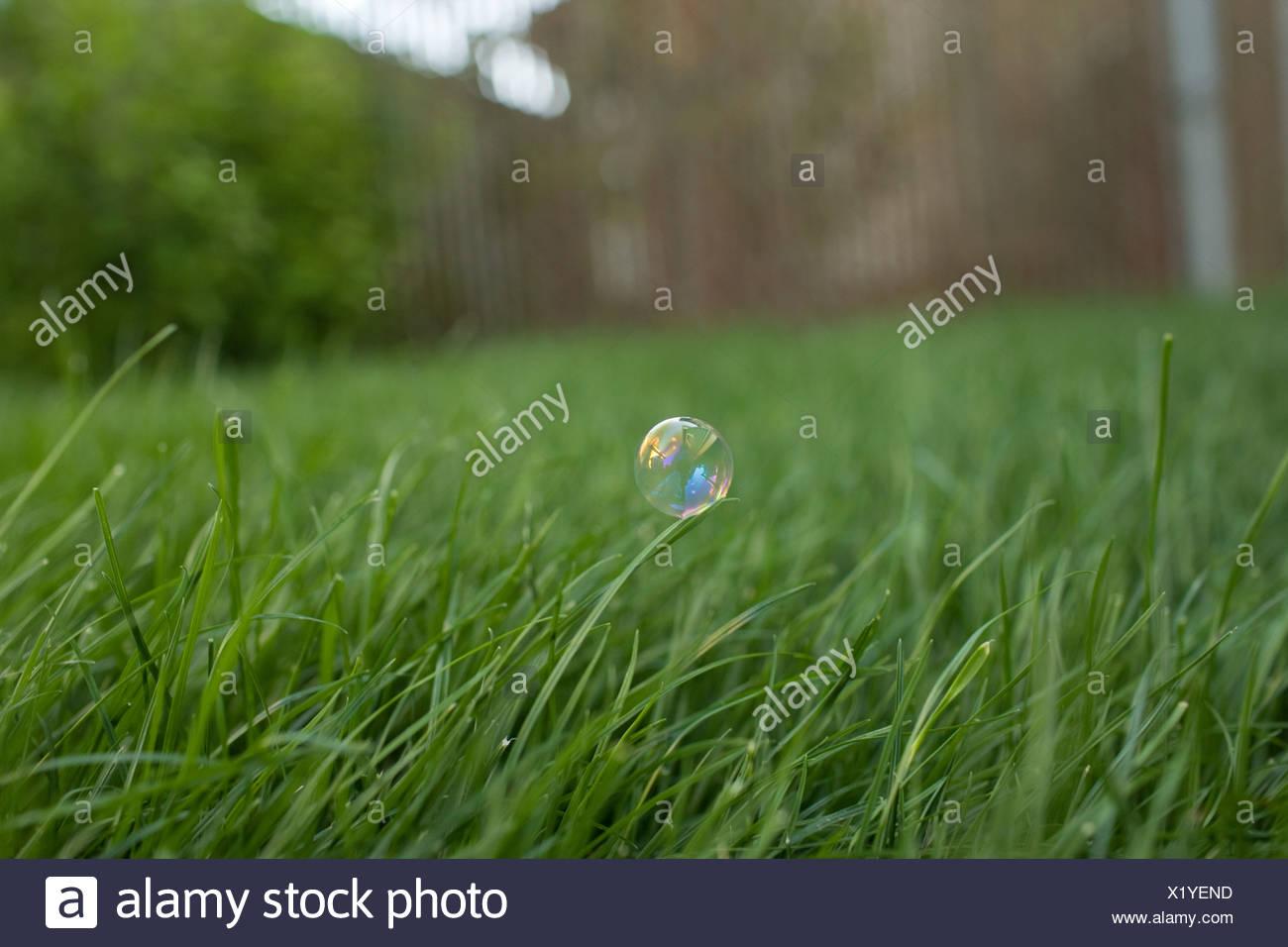 Bubble su erba Immagini Stock
