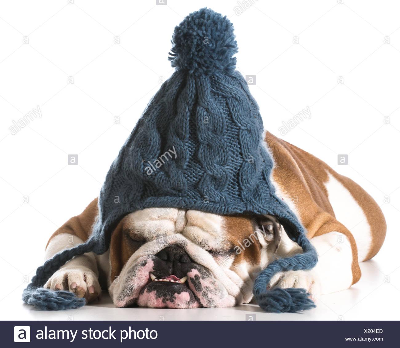 Cane indossando maglia Cappello invernale su sfondo bianco - Bulldog inglese 95d4d4781843
