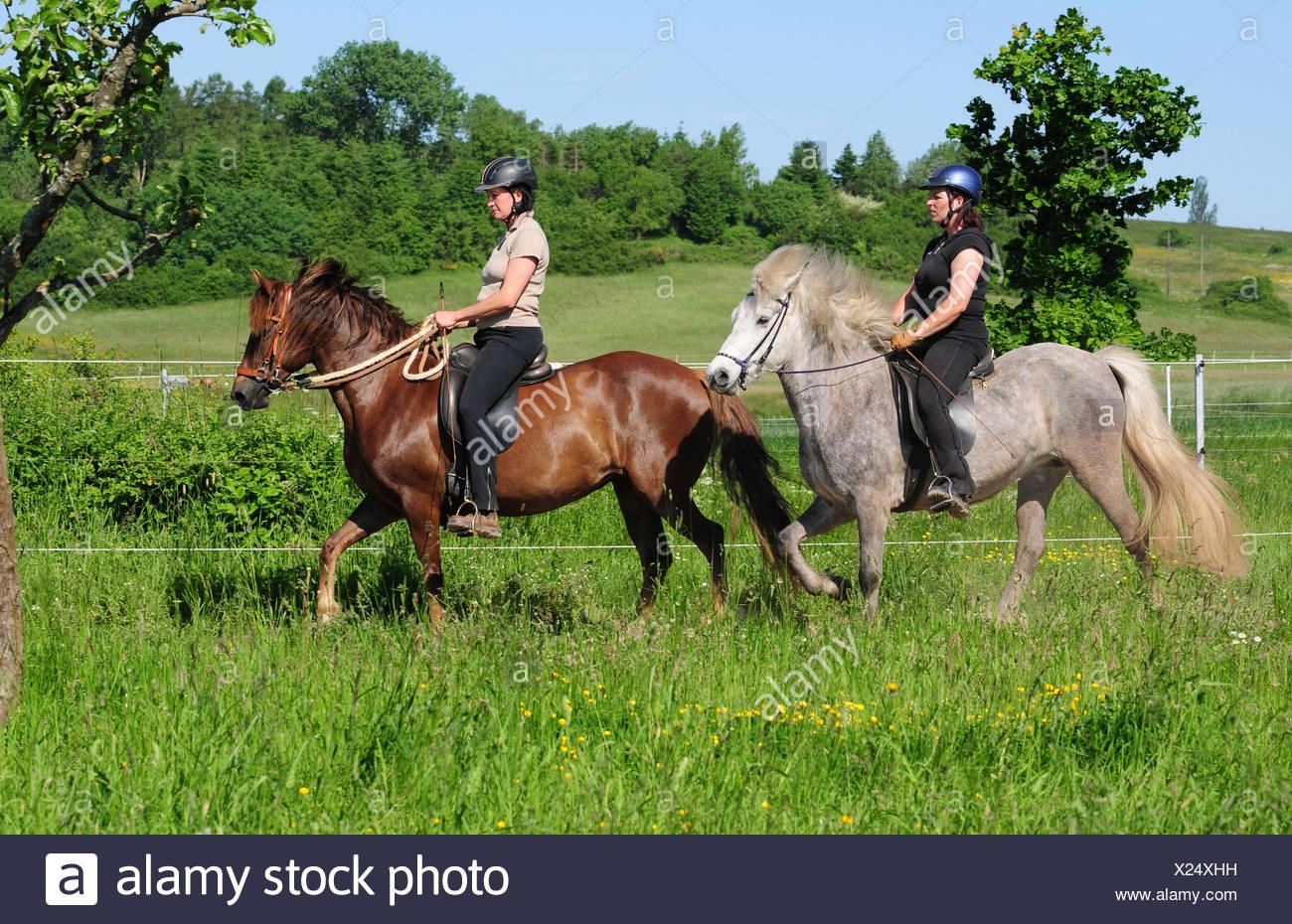 ebano adolescenza equitazione