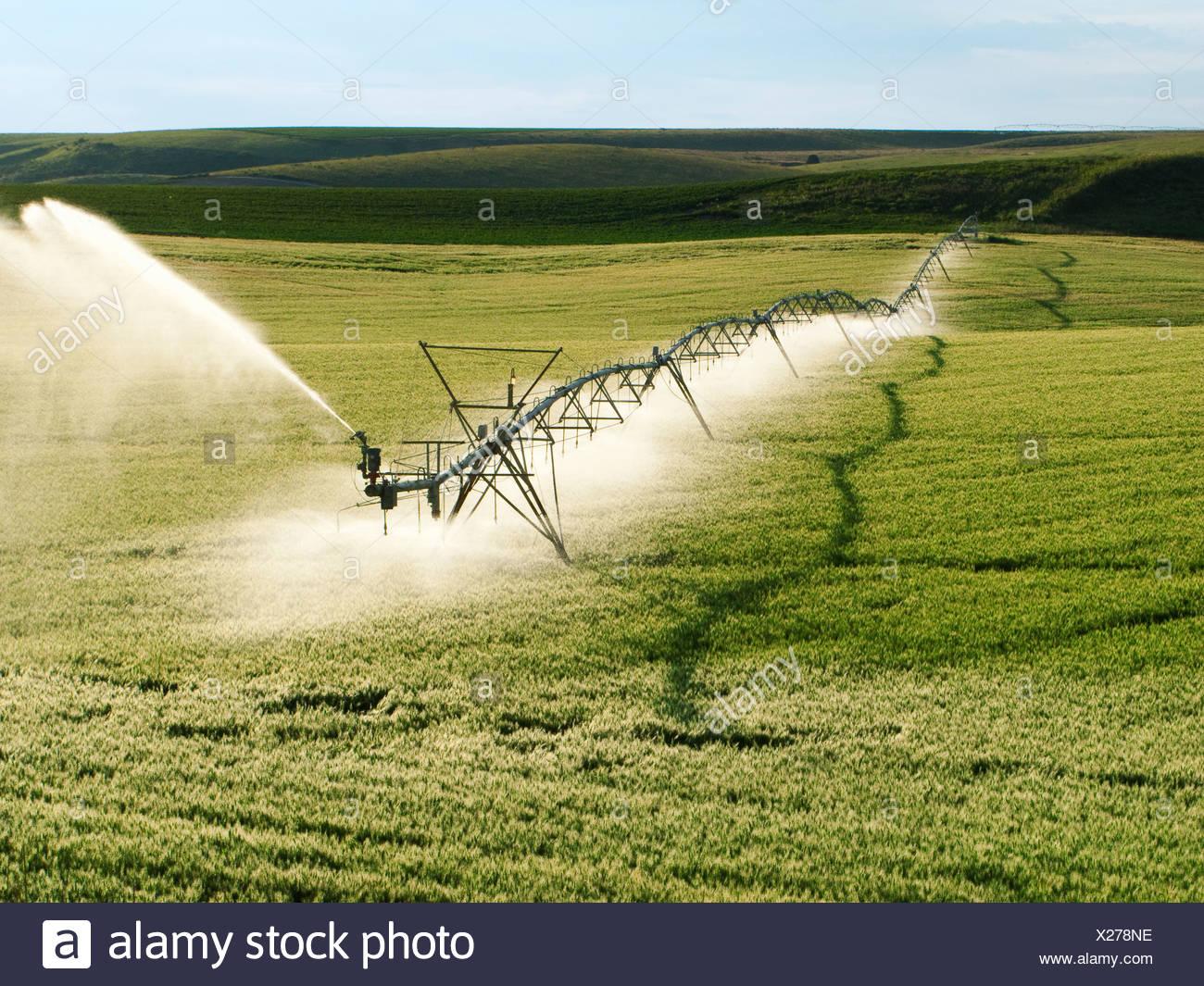 Agricoltura - Centro Operativo di articolazione del sistema di irrigazione su un verde campo di grano / Idaho, Stati Uniti d'America. Immagini Stock