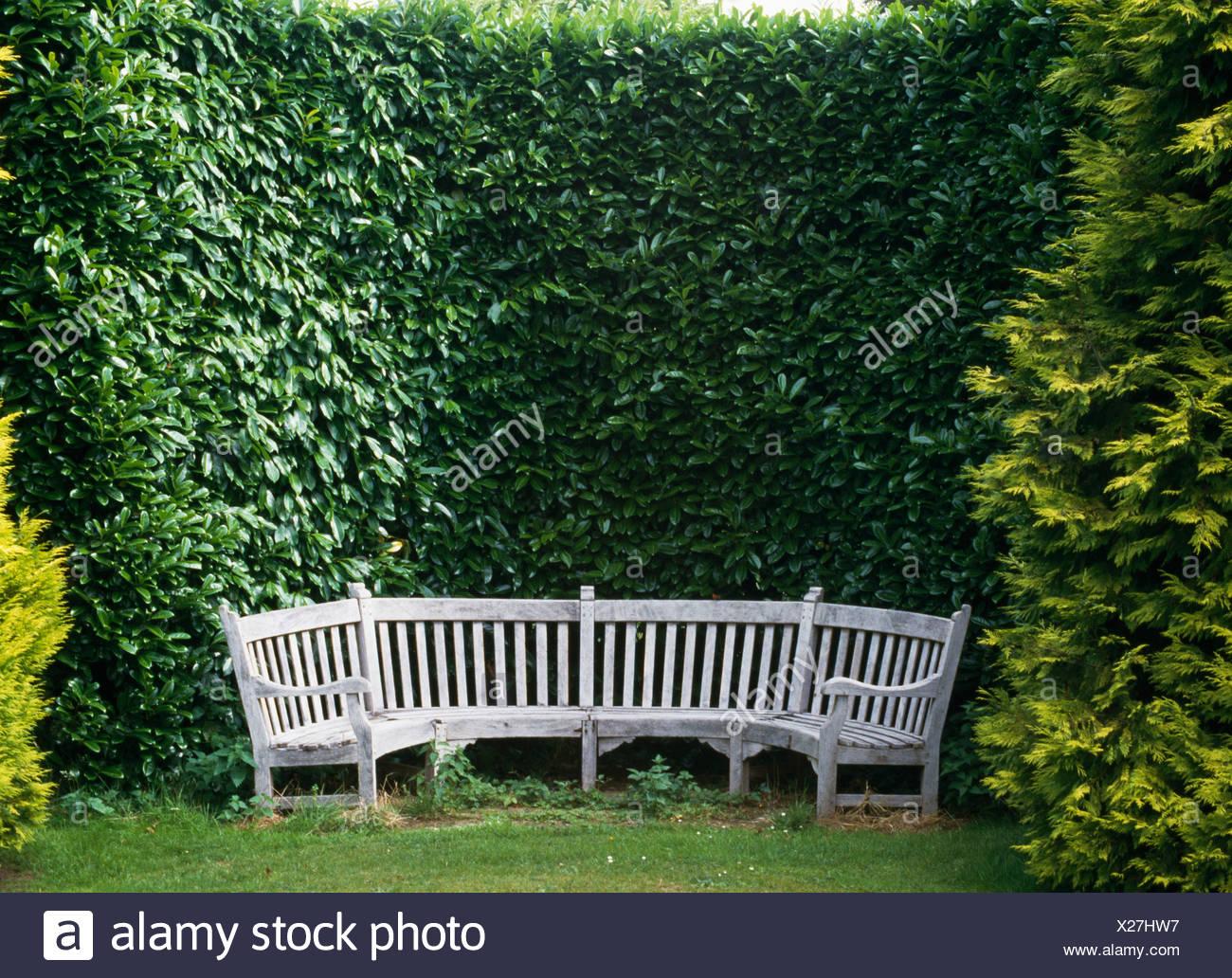 Siepi Da Giardino Prezzi : Immagini siepi da giardino interesting immagini siepi da giardino