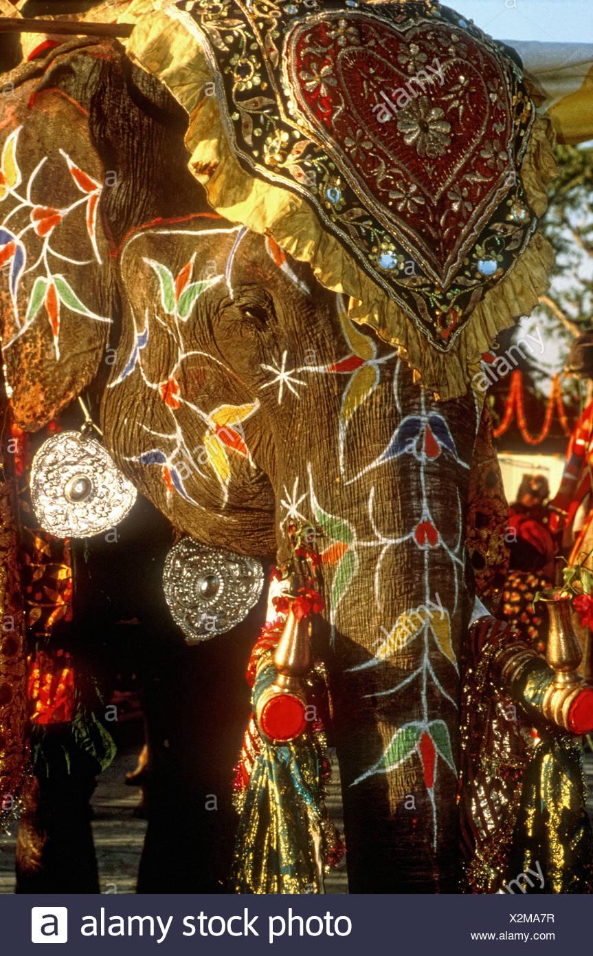 Un riccamente decorate elefante indiano adornata con jeweled panno e bracciali in argento a una celebrazione India Immagini Stock