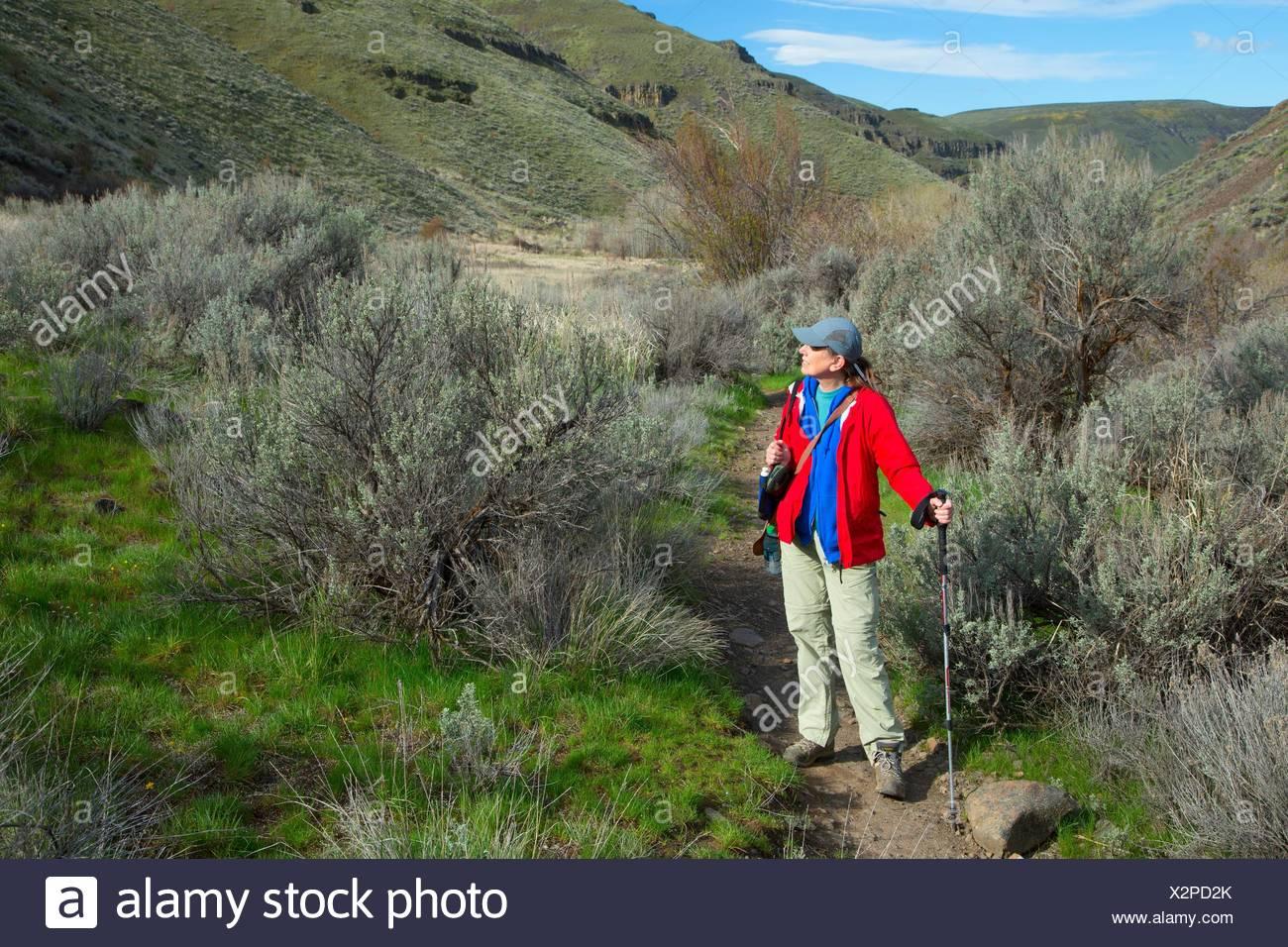 Umtanum Creek Trail, Yakima River Canyon Scenic e di attività ricreative autostrada, Wenas membro Area faunistica, Washington. Immagini Stock