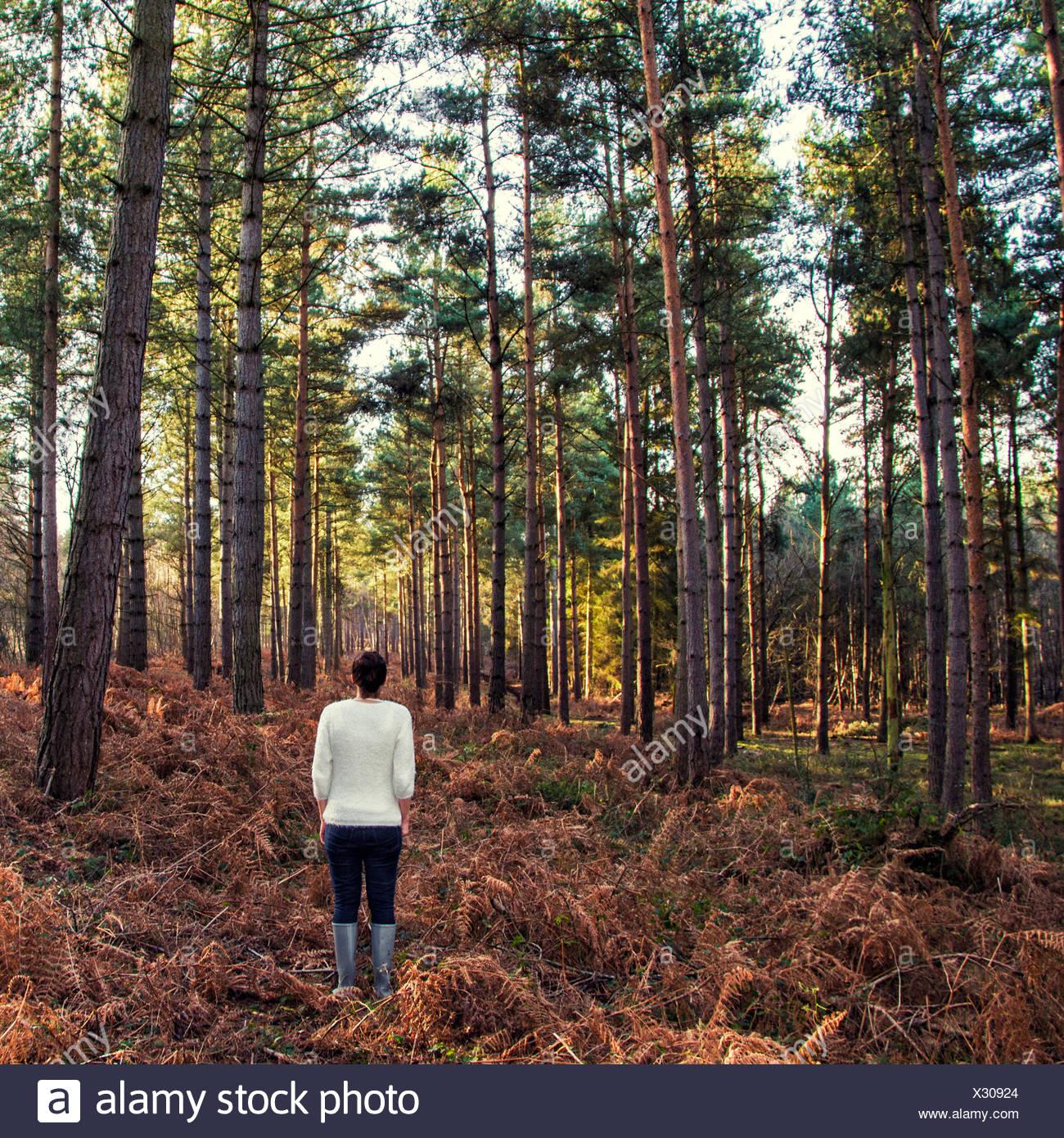 Vista posteriore della donna in piedi nella foresta Immagini Stock
