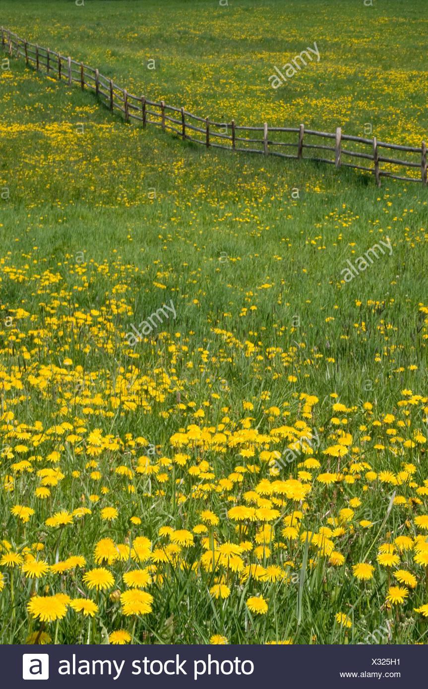 L'Italia, Alto Adige, il prato fiorito Immagini Stock