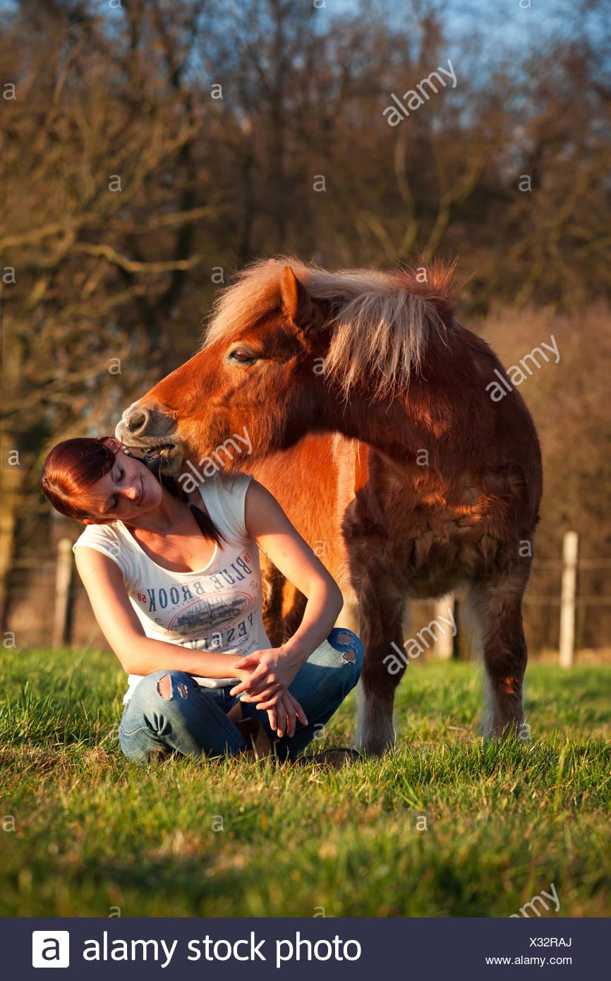 Pony Shetland, castagno castrazione, nuzzling ad una ragazza in orecchio, ragazza seduta zampe trasversale Immagini Stock