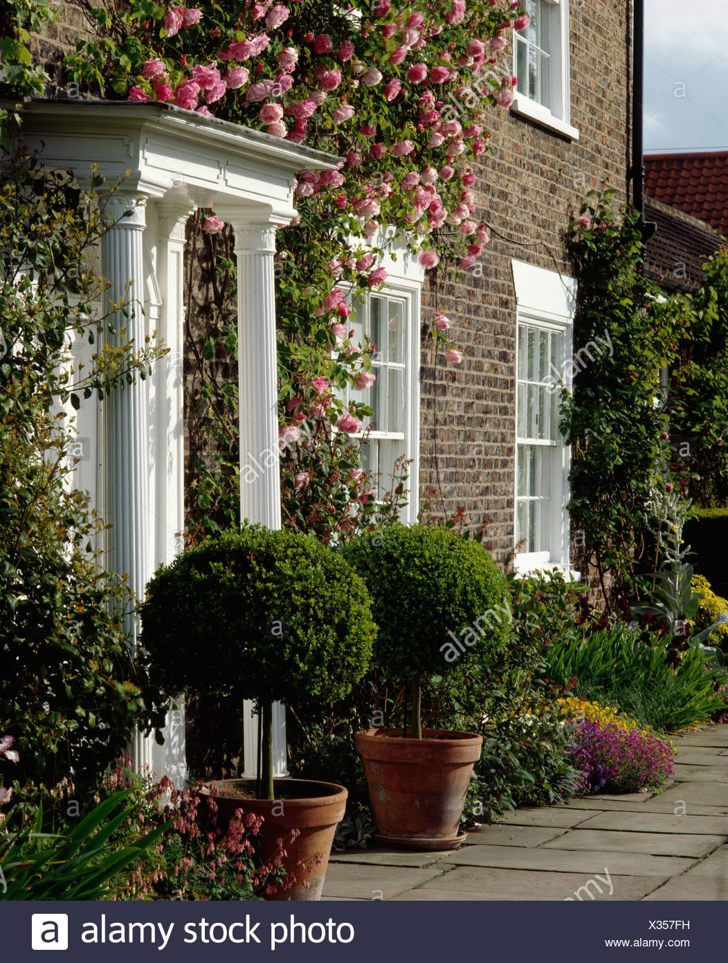Rosa Rampicante In Vaso ritagliato arbusti in vasi di terracotta su entrambi i lati