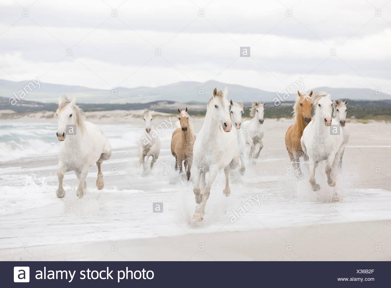 A cavallo sulla spiaggia Immagini Stock