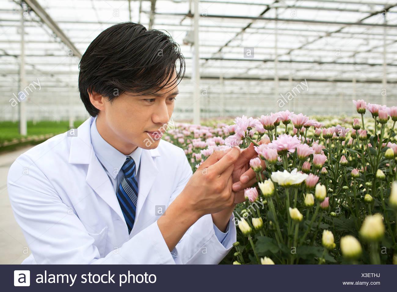 Uomo che guarda a piante che crescono in serra Immagini Stock