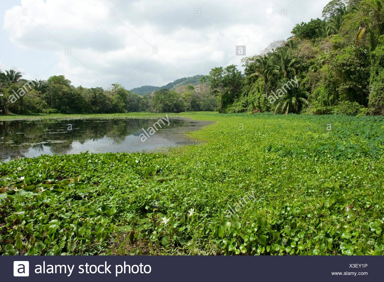 Vista del Lago di Gatun Panama Immagini Stock