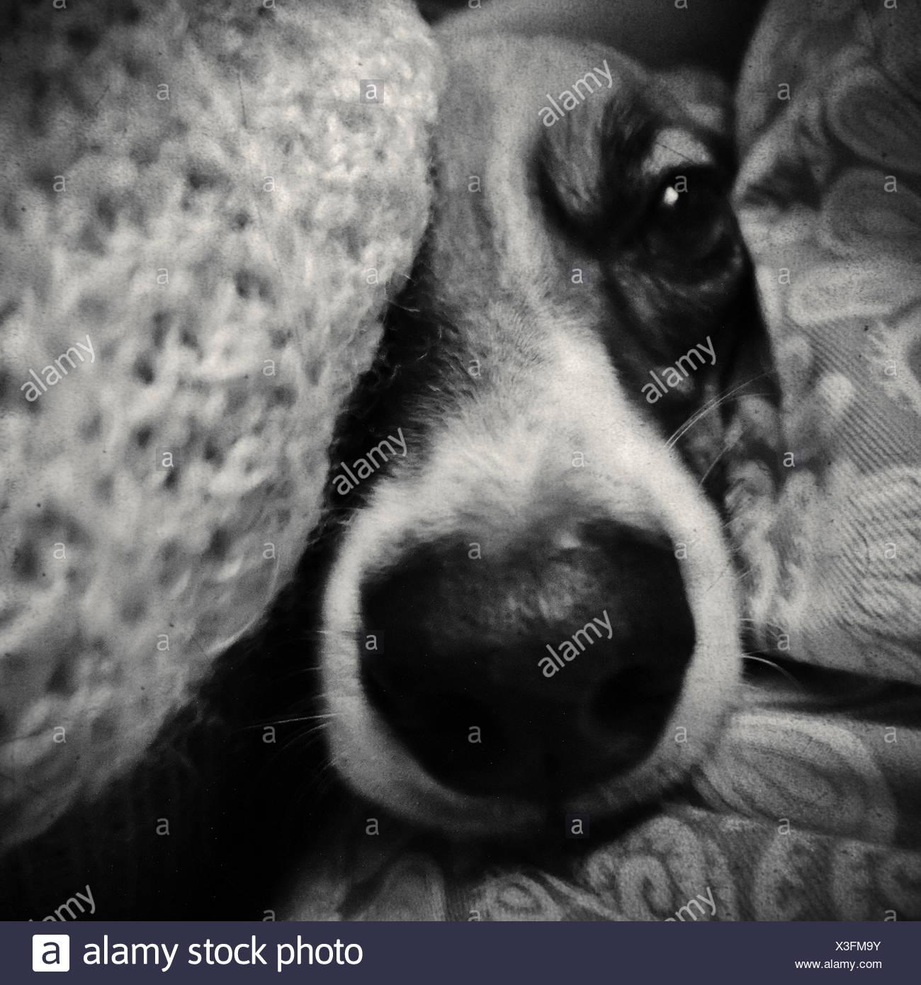 Close up ritratto di una faccia del cane Immagini Stock