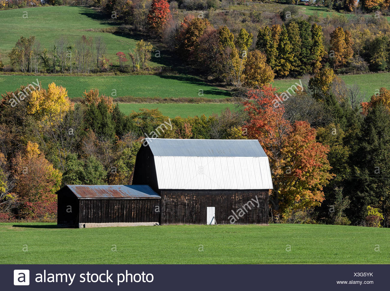 Fienile rurale con tetto dello stagno, Covington, New York, Stati Uniti d'America Immagini Stock
