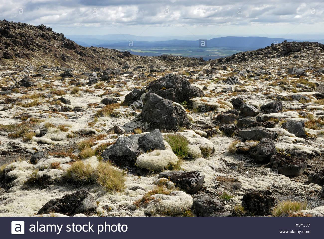 Le rocce vulcaniche parzialmente ricoperta con MOSS, Monte Ruapehu, Tongariro National Park, North Island, Nuova Zelanda Immagini Stock