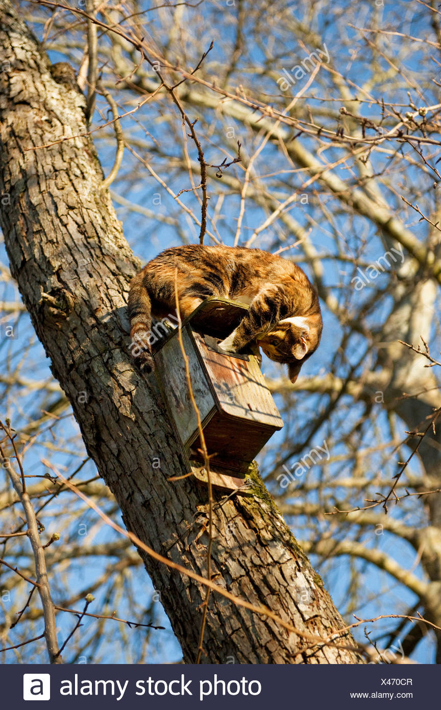 Un gatto e una scatola di nidificazione in un albero, Svezia. Immagini Stock