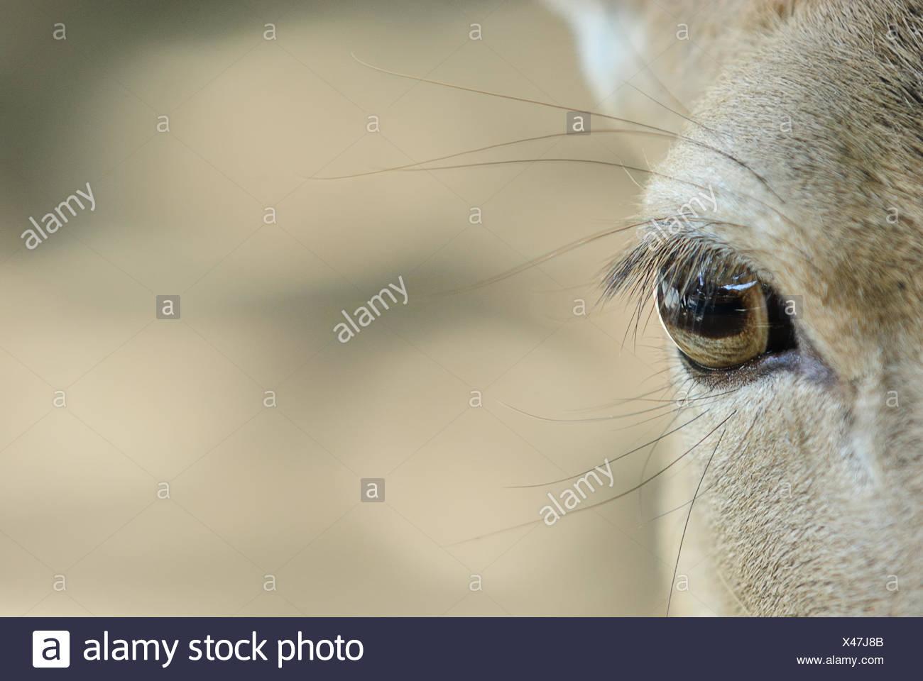 Dettaglio mammifero di mammiferi Immagini Stock