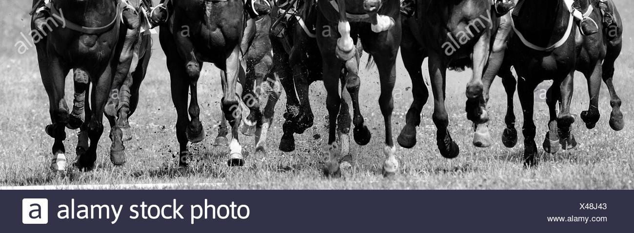 Corse di cavalli Immagini Stock