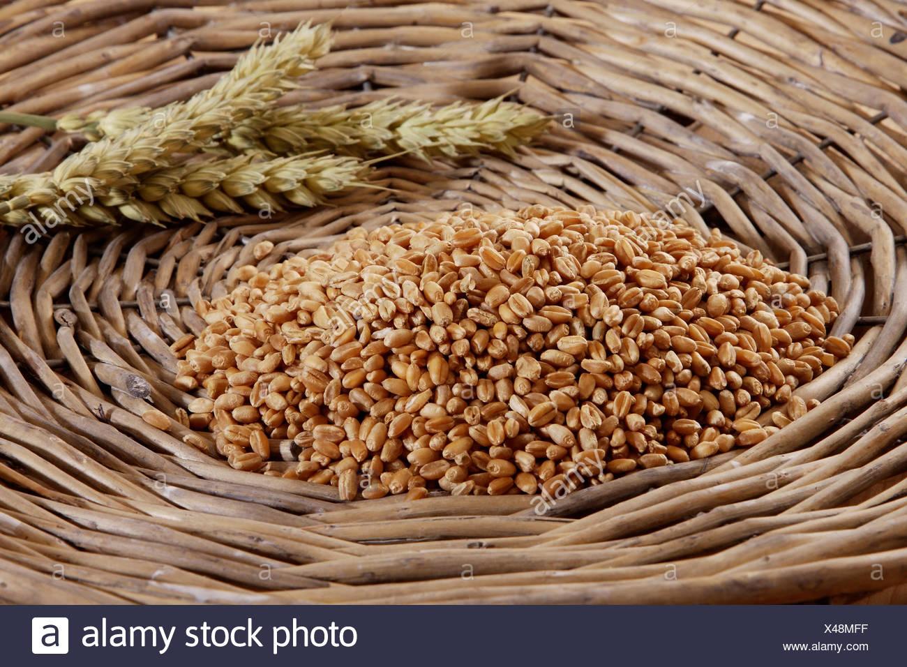 Chicchi di grano (Triticum) con spighe di grano in un cesto tessuto Immagini Stock