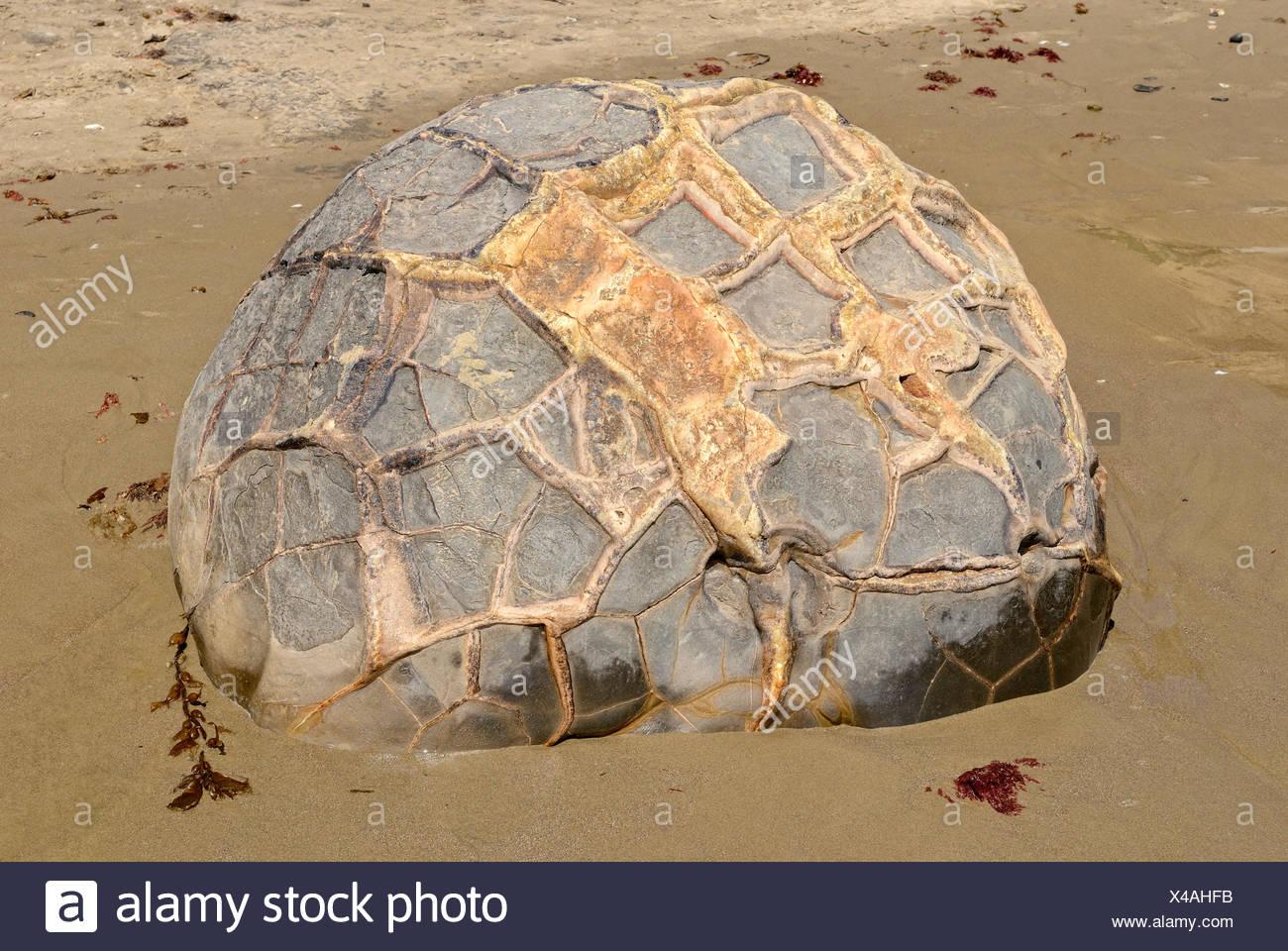 Boulder con una superficie strutturata su di una spiaggia di sabbia, Moeraki Boulders, geologico formazione di roccia, Moeraki, East Coast Immagini Stock