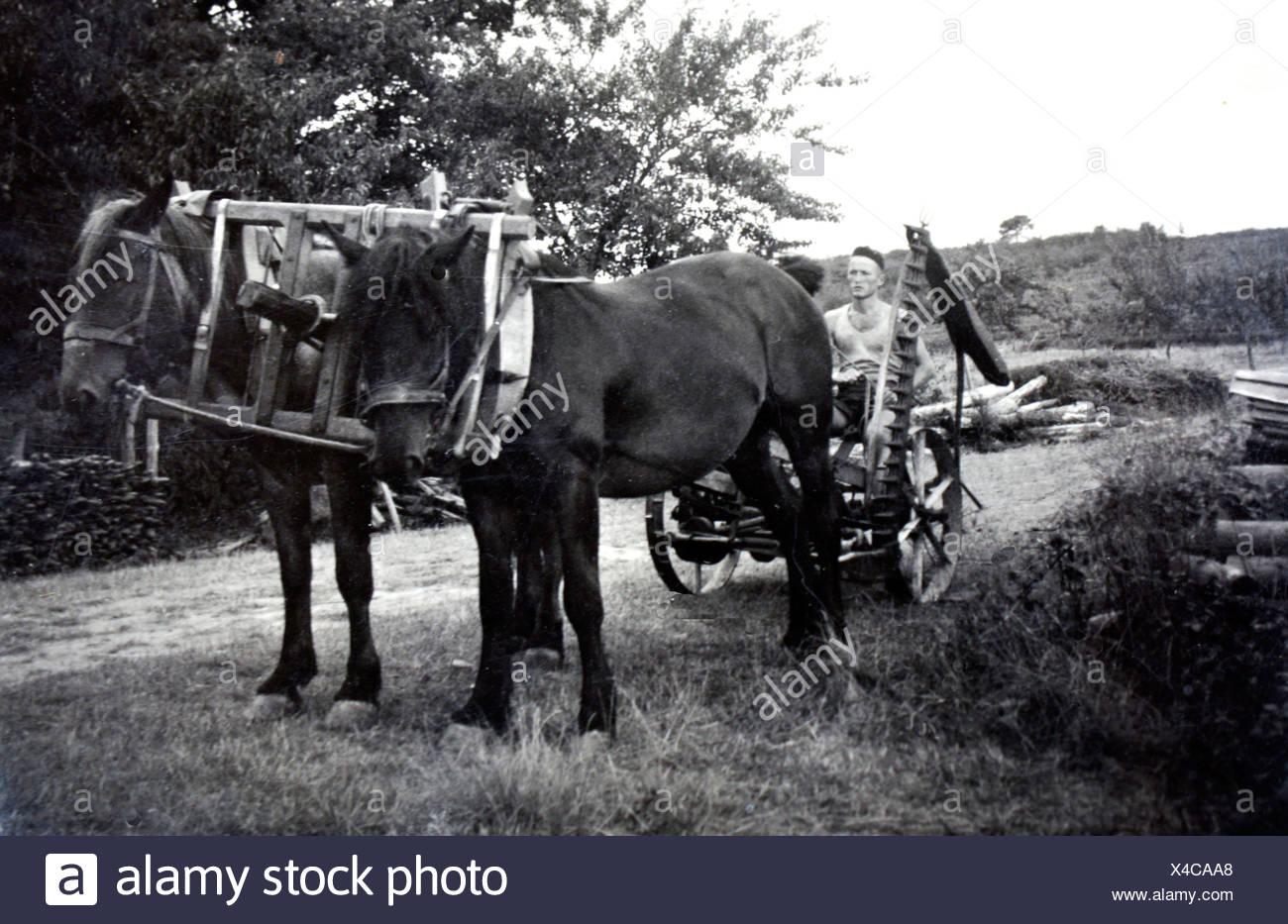 Giovani Signor Gessler, al suo arrivo dalla Svizzera prima di iniziare il Domaine de Joÿ vino e armagnac station wagon, Panjas, Gers, Immagini Stock
