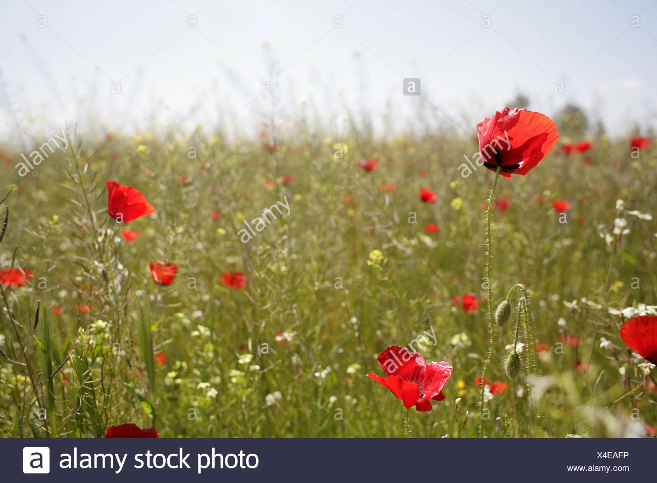 Spagna, prato, molla, natura, alberi, molla a prato prato di fiori ...