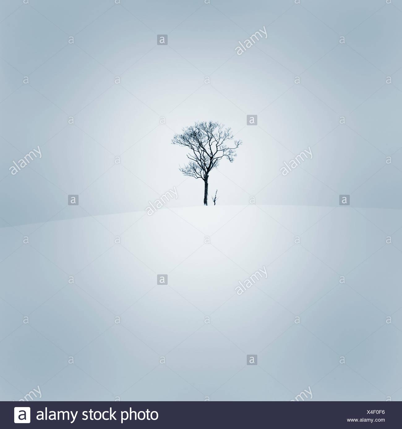 Albero solitario in presenza di neve tetro paesaggio Immagini Stock