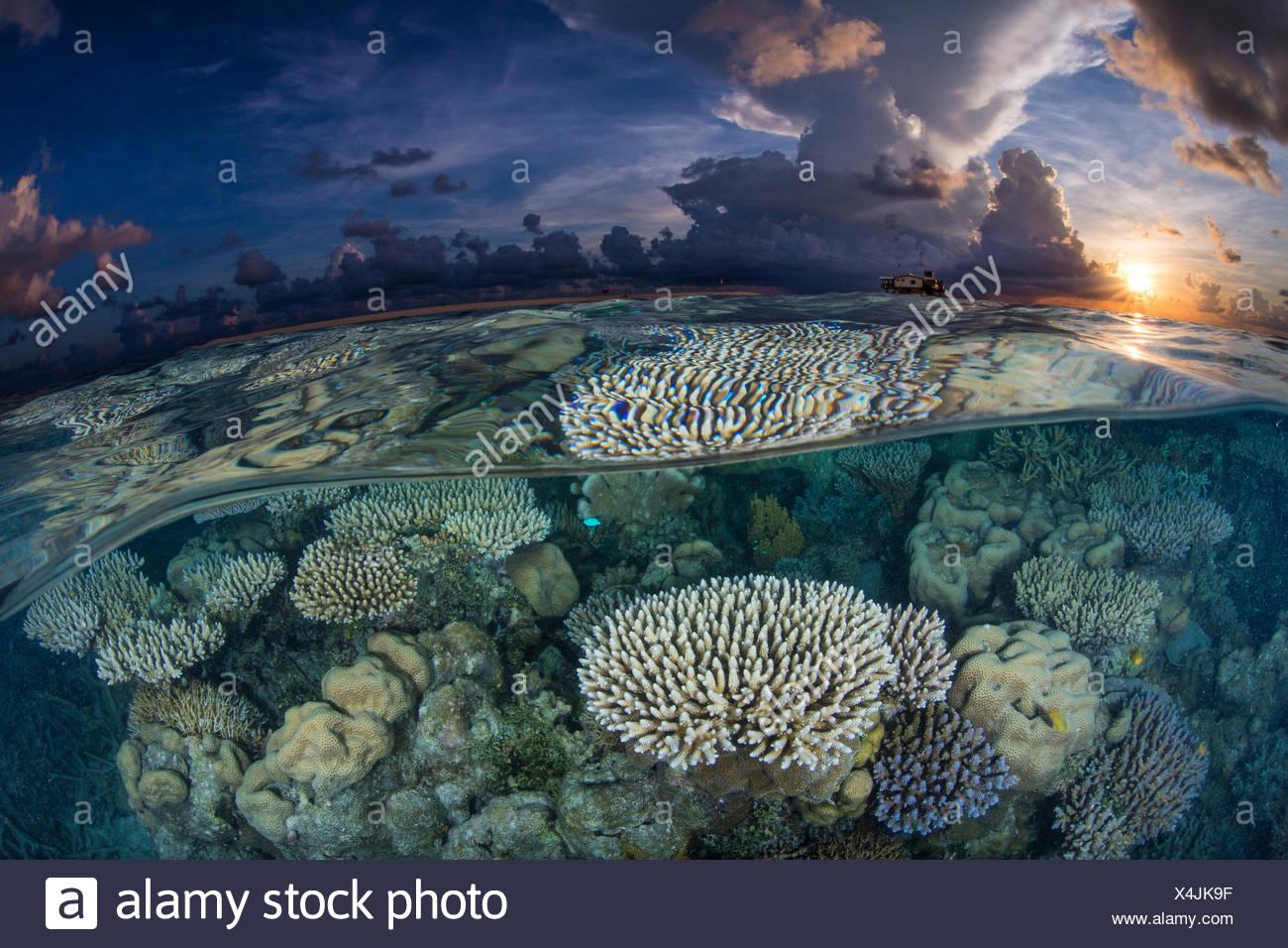 Sunrise su una bassa scogliera di corallo a Tubbataha stazione di ranger. Immagini Stock