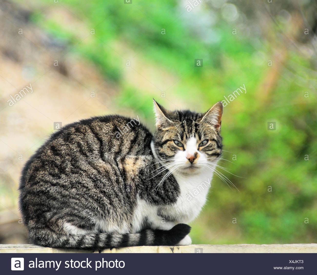 Ritratto di dolce tabby cat Immagini Stock