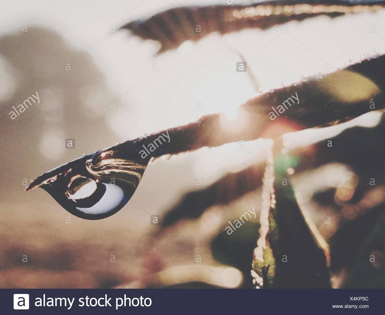 In primo piano della caduta di pioggia sull'erba Immagini Stock