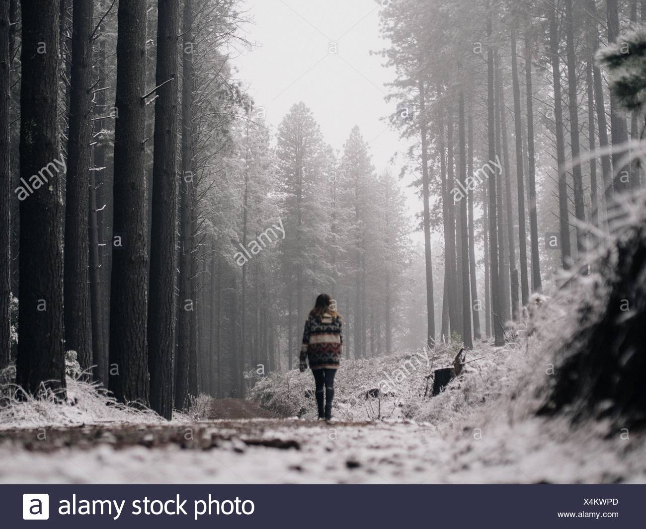 Vista posteriore della Donna che cammina nella foresta Immagini Stock