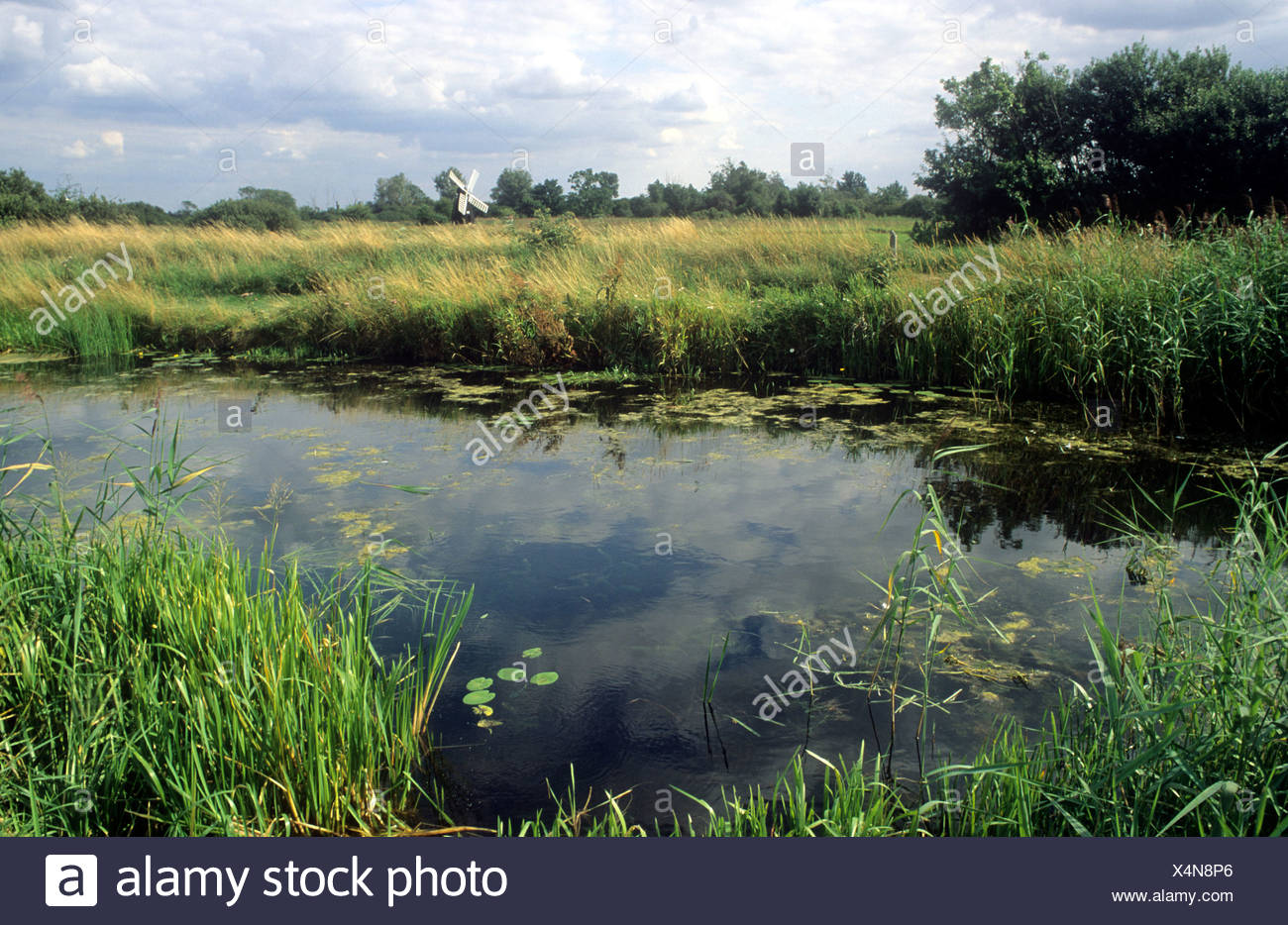 Wicken Fen, Fenland, drenaggio Mill, Cambridgeshire habitant naturale inglese REGNO UNITO Inghilterra canne acqua di fiume il mulino a vento di flusso Foto Stock