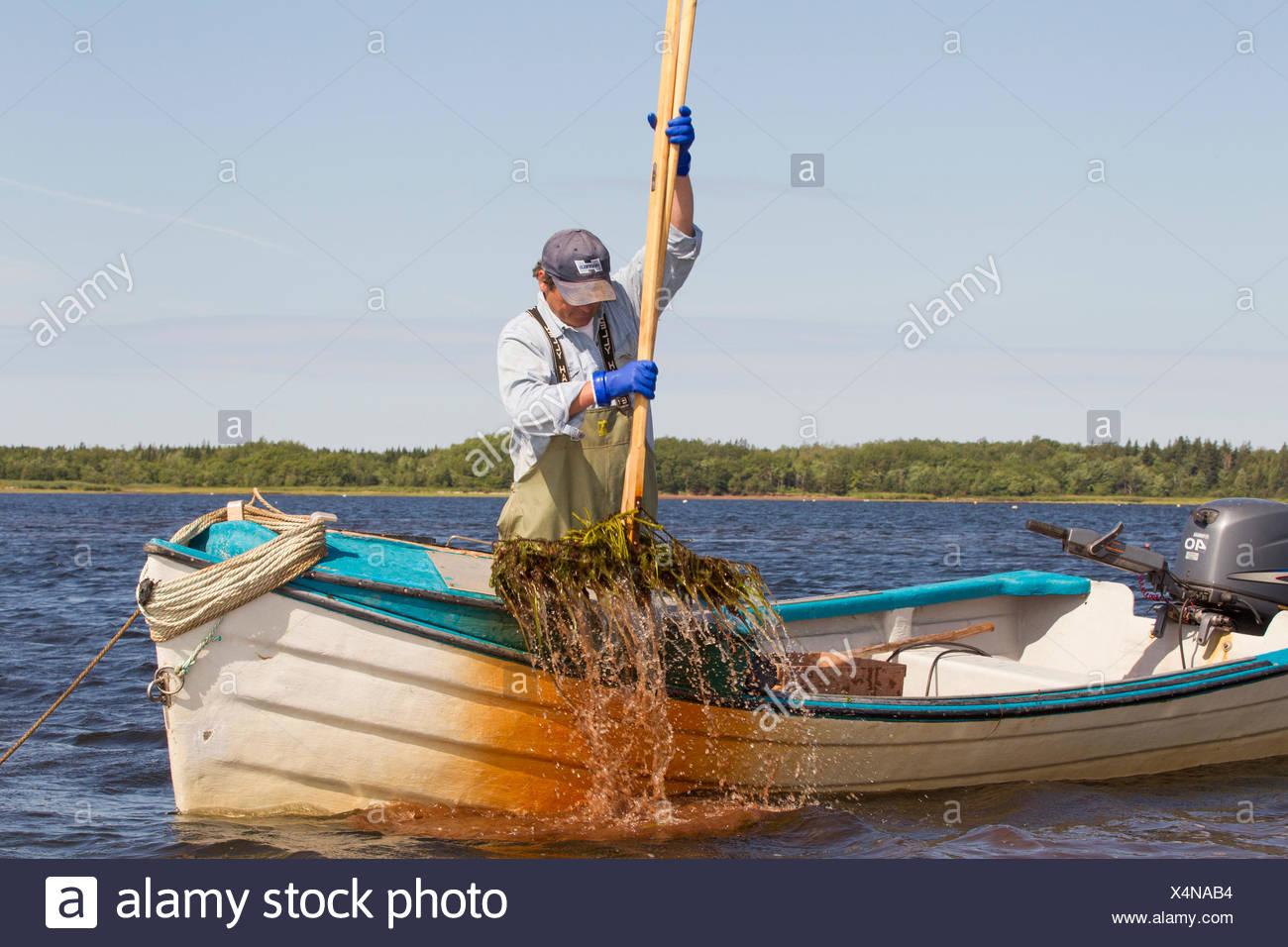 Oyster pescatore, West Principe, Prince Edward Island, Canada Immagini Stock
