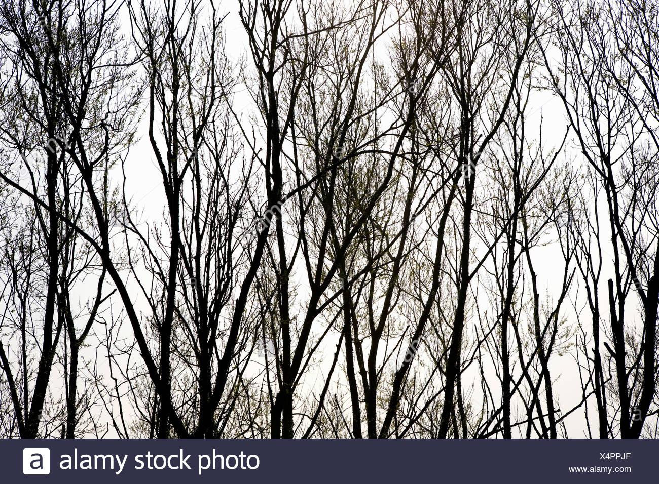 Silhouette di alberi Immagini Stock