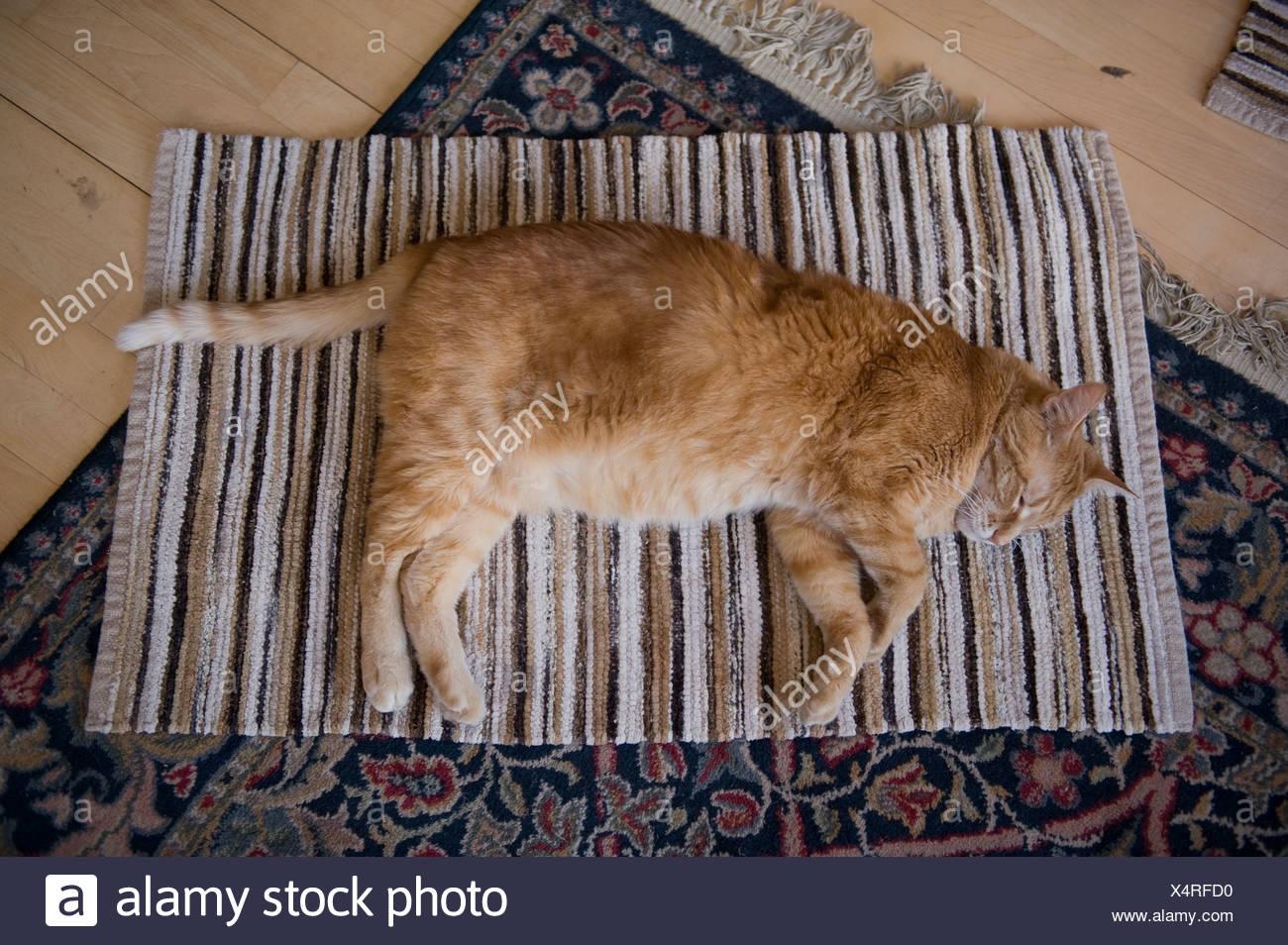 Un gatto riposa in pace su un tappeto a Lincoln, NE. Immagini Stock