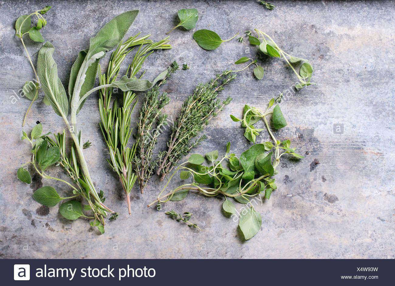 Assortimento di erbe fresche di timo, rosmarino, salvia e origano su metallo grigio Sfondo. Vista superiore Immagini Stock
