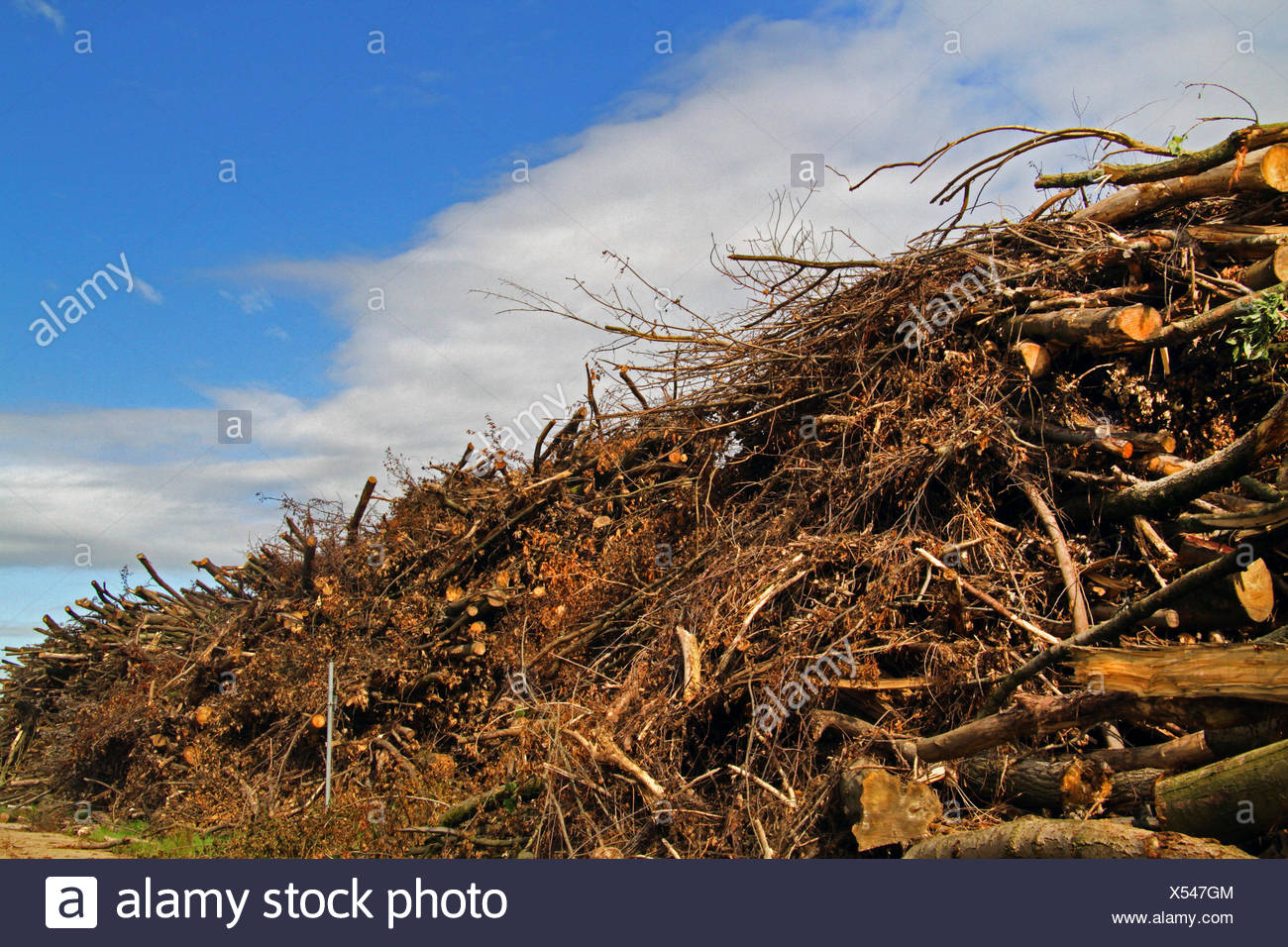 Stoccaggio di legname dopo la deforestazione, Germania Immagini Stock