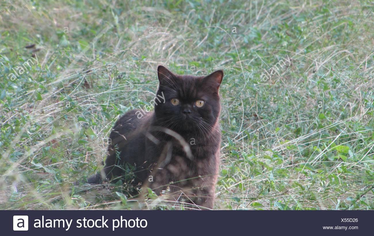 grande micio nero adolescenza