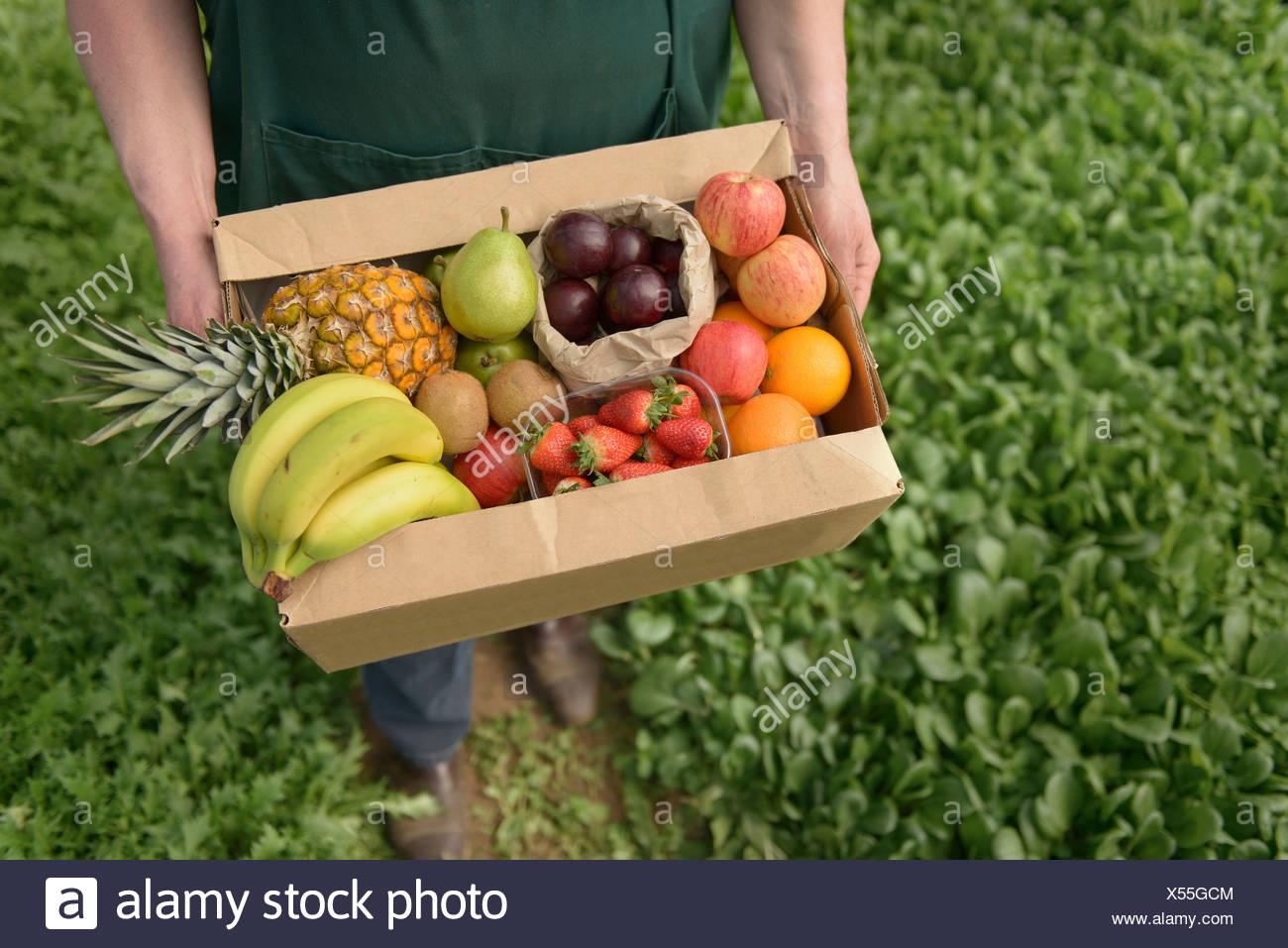 L'agricoltore che trasportano frutta in scatola per la consegna, close up Immagini Stock