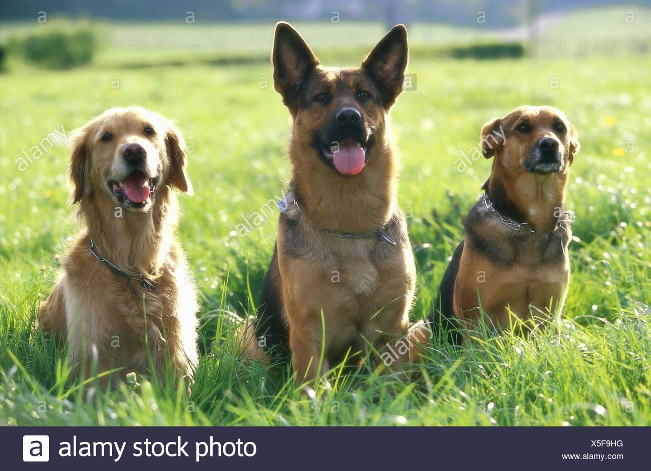 Animali Da Esterno prato, cani, razze diverse foto di gruppo, animali mammiferi
