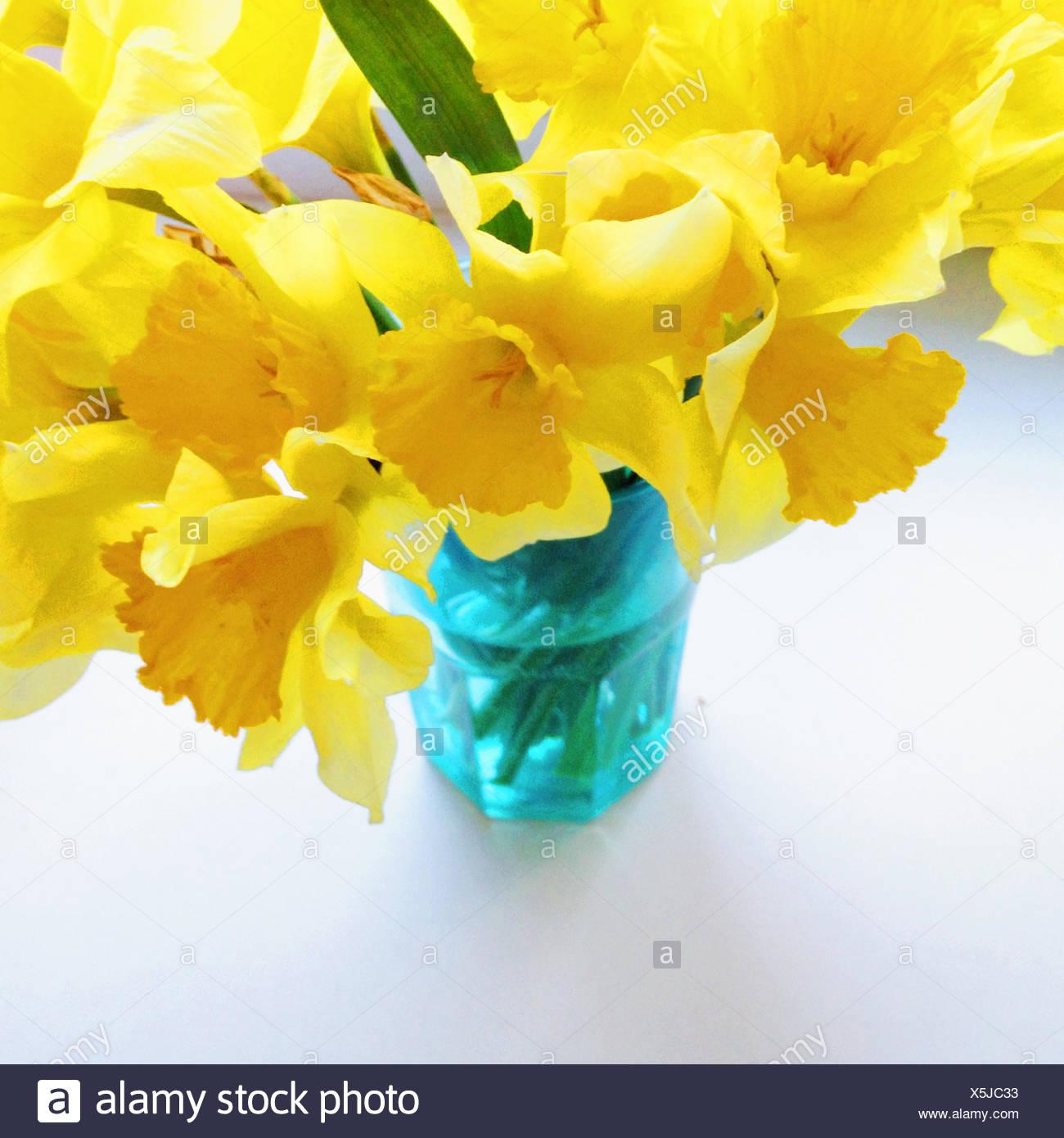 Mazzo Di Narcisi In Vaso Blu Immagini Stock