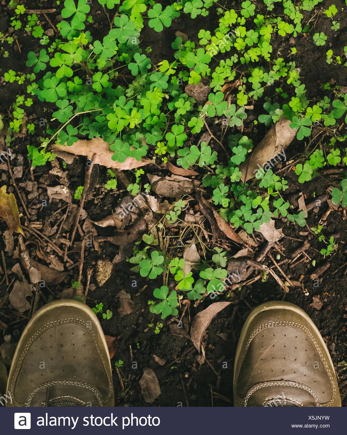 Sezione bassa dell'uomo in piedi di fronte a piante Immagini Stock