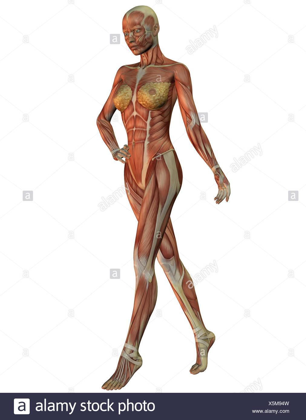 3D Rendering Anatomie und Muskulatur der Frau beim laufen Foto ...