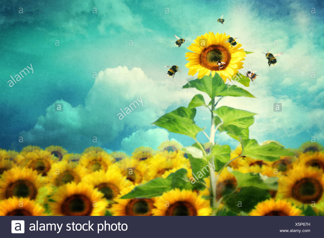 Concetto di immagine di un girasole alto standing e attirare un numero maggiore di api Immagini Stock