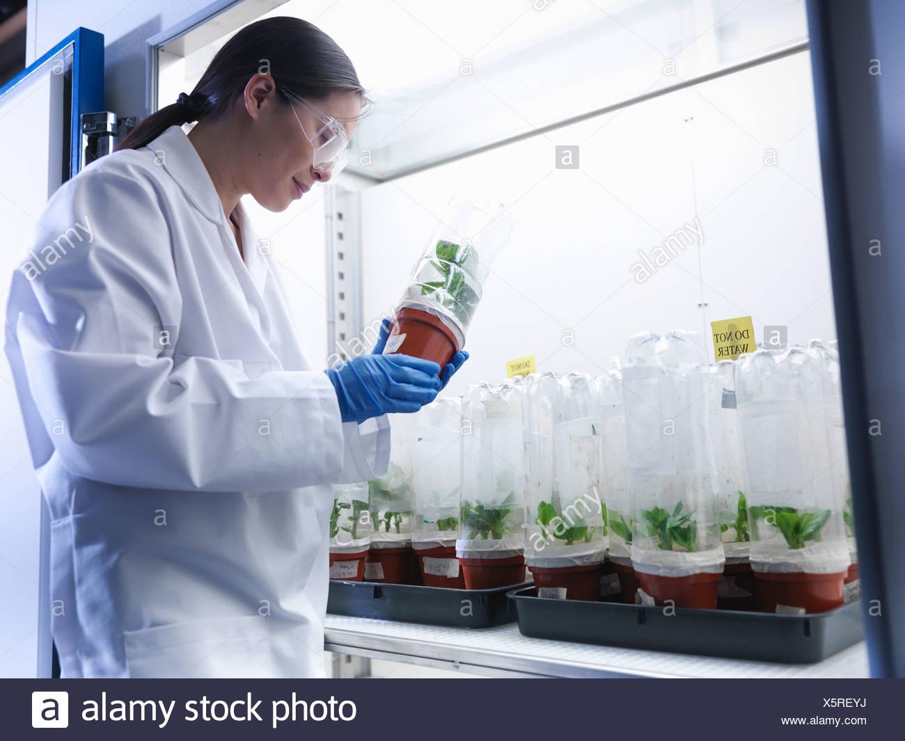 Scienziato esaminando invasati in laboratorio Immagini Stock