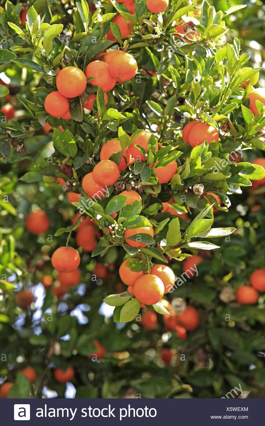 Piante Da Frutto Sempreverdi frucht - pianta da frutto piante di alberi ad albero