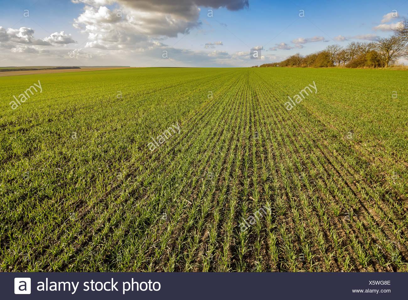 Paesaggio emozionante Foto Stock
