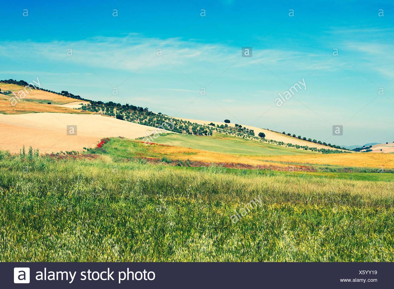 Paesaggio rurale, Campo, Spagna Immagini Stock